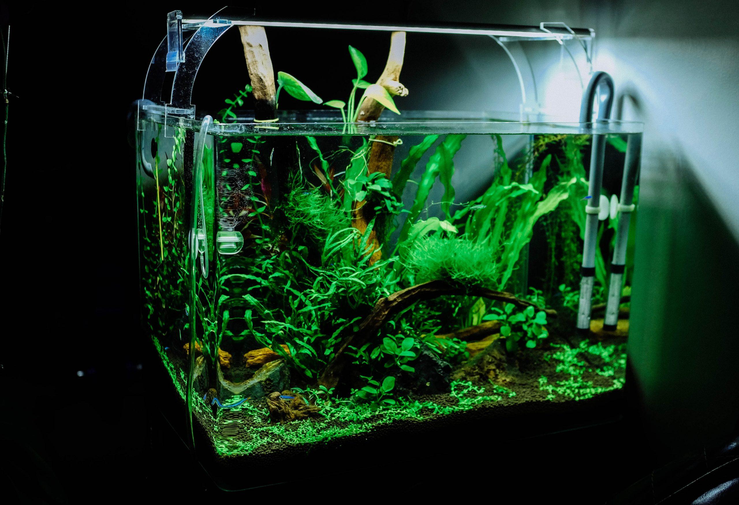 akvarium tilbehør